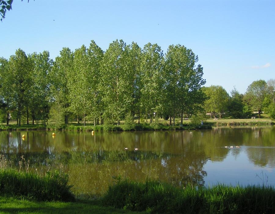 nature-arbre-verdure-autour