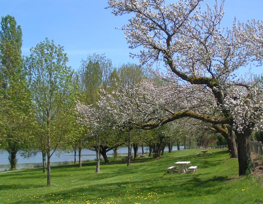 verdure-arbre-fleuri